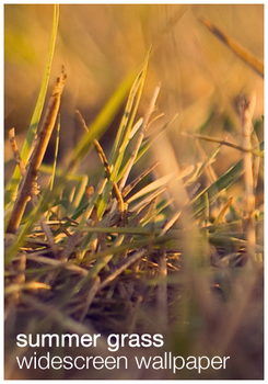 Summer Grass Wallpaper by plonko