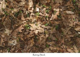 forest floor texture by Rainny-Stock