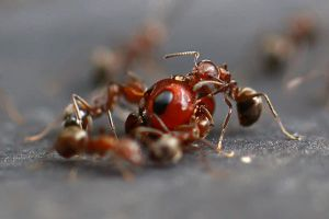 Ants Life 01 by josgoh