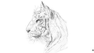 White Tiger by Racuch