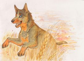 dog by Canis-Infernalis