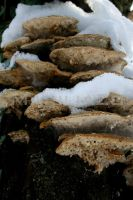 mushrooms in the cold by MariliaZo