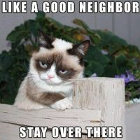 Grumpy Cat Neighbor by CMDRCHAOS