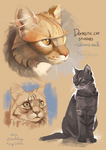 Cat studies by Nordeva