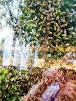 More bees. by KristineAdelia