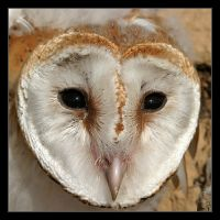 Owl sight by invisiblewl