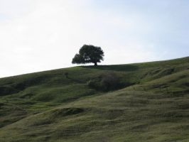 Tree on a Hill by rachellafranchistock