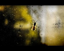 Acid Wasp by fL0urish
