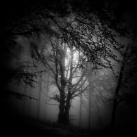 -Filemon and Baucis- by Janek-Sedlar