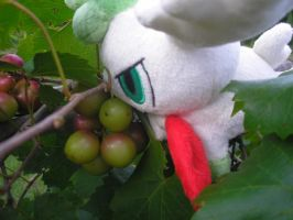 Shaymin Sky Berries by superphail