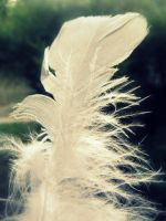 Light as a Feather by lamour-means-love