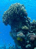 Coral reef by Dracofemi