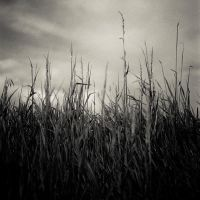 3380 Wild Grasses by paulcooklin