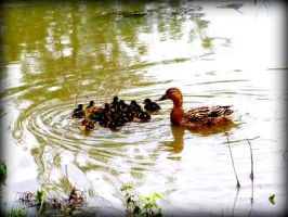 Duck Family by PicnikArt
