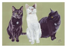 The Sestig Cats by LindaColijn