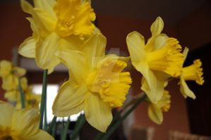 Narcis 3 by JulieDing