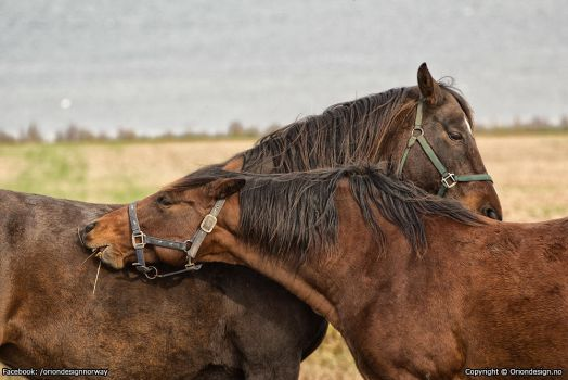 Embraceing horses by oriondesignnorway