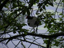 Moor Hen in a Tree by Witchling-V