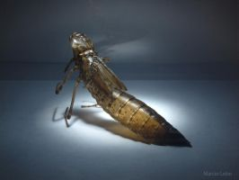 Dragonfly Exuviae by MarcioLobo