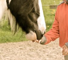 Feeding the horse.. by Dodephine