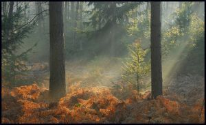 Lightthought 509 by lightthinker