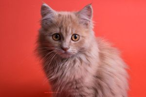 RED CAT by hotamr