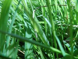 Stock - Grass #2 by MrDragonfyr-Stock