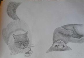 Fluffy Cat and Rolling Cat by CJM99