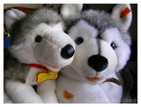 Sascha And Kody Husky Plushes by The-Toy-Chest