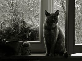Cat, window and a cactus. by vlastas