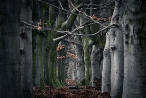 Enter the Labyrinth by erynlasgalenphotoart