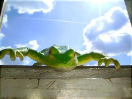 Frog from the sky by fionaadam