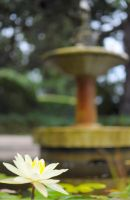 Lotus in the Fountain by jndphotography