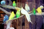 Several Budgerigamis And An Origamitoo by aegiandyad