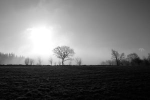 Early Spring Fog by BAproductions