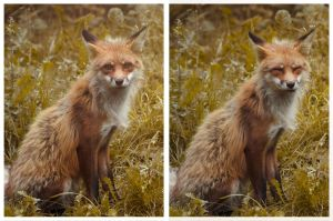 Happy red fox by Dahlia-Aubrey