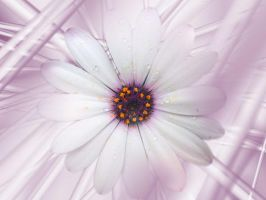 Daisy with drops III by Pollon82