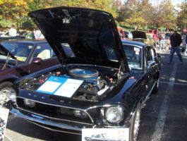 Ford Mustang Shelby GT 500 by lpprincess517