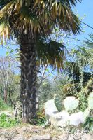 view to palm and cactus by ingeline-art