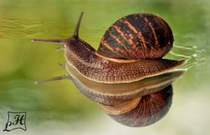 snail and its own forest by kafeidou
