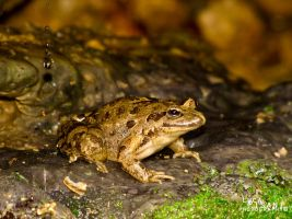 Frog In A Hole by Maltese-Naturalist