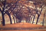 Tree Tunnel by ganmare