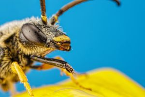 Feeding Solitary Bee Series 1-5 by dalantech