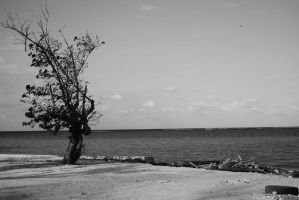 Lone Tree by TawnsterMonster