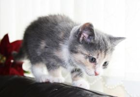 Kitten by Waimee