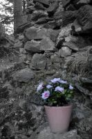 Ruins are full of flowers by hendur