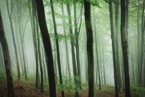 the forest of my dreams VI by JoannaRzeznikowska