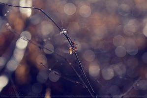 Spiderweb, pt III. by Ravenith