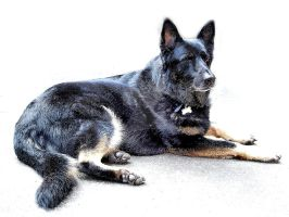 German Shepherd by JLP-Pelton