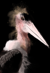 Marabou Stork-speedpainting by Earldense